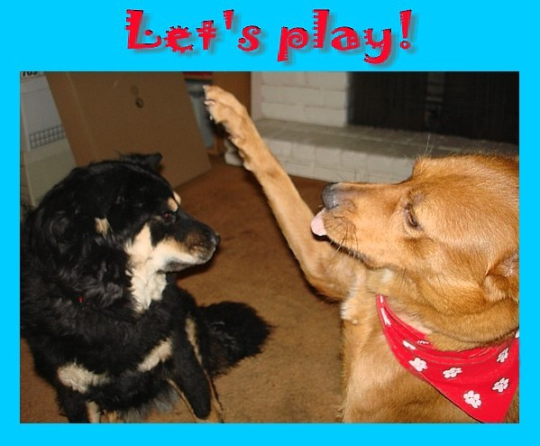 Cayenne to Pepper: Let's play!