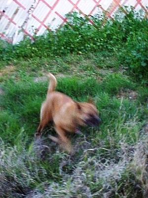 Run, Tuffy, run!