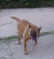 Dizzy dog!