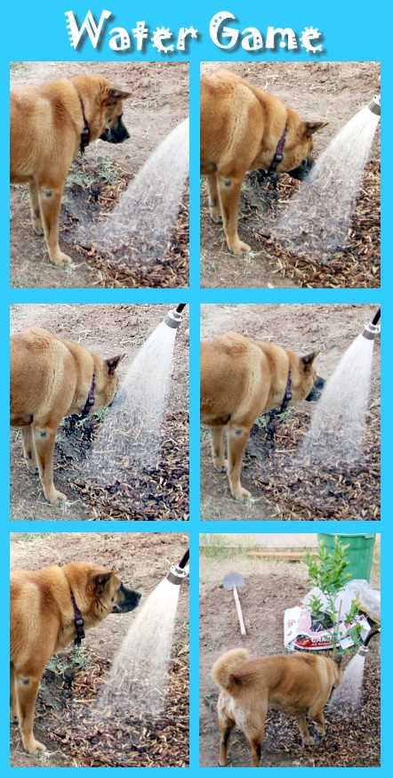 Tuffy's Last Water Game