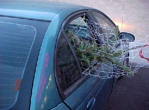 the tree in the car